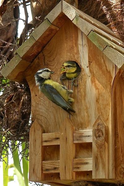 Visite th matique les oiseaux et leurs chants marly le for Visite dans les yvelines