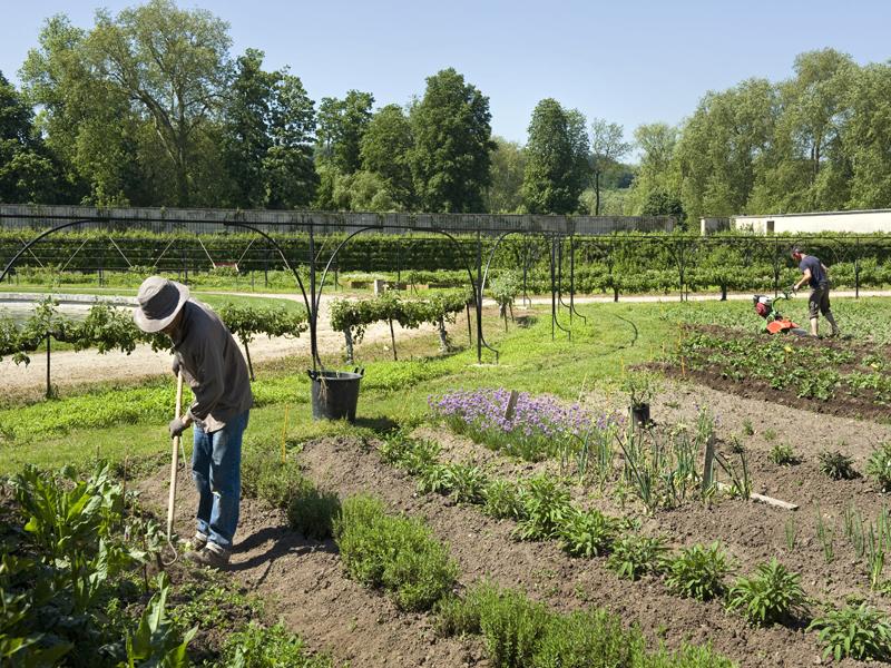 Jardin passion partage une association qui cultive les for Jardins de jardiniers
