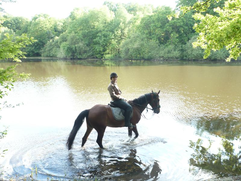 Randonnez autrement en yvelines cheval rollers chasses for Visite gratuite dans les yvelines