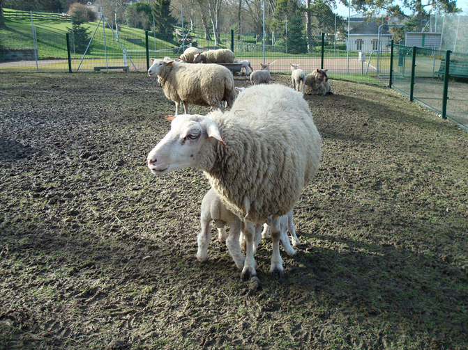 Quels animaux mini ferme for Yvelines sortir