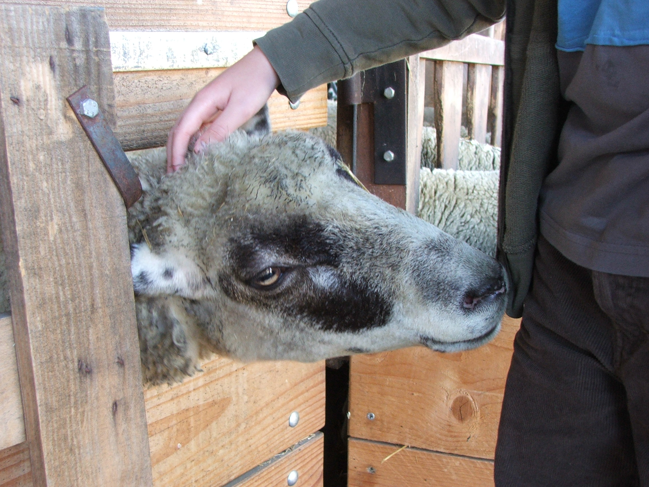 Tonte laine premi re date de l 39 ann e 2016 la bergerie for Tarif tonte pelouse 2016