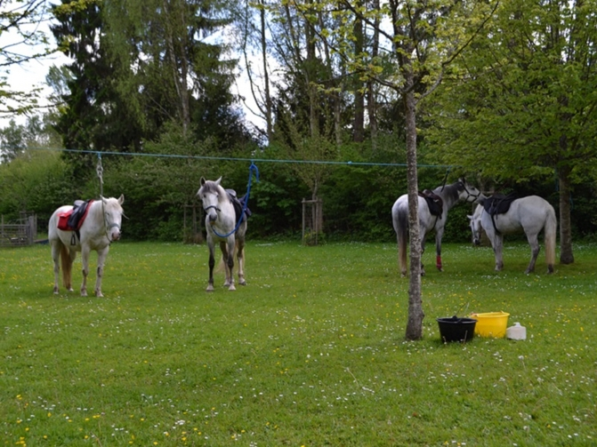 Balade cheval foret rambouillet
