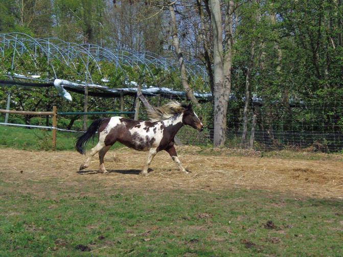 Les chevaux des pr aux yvelines tourisme for Sortir dans les yvelines