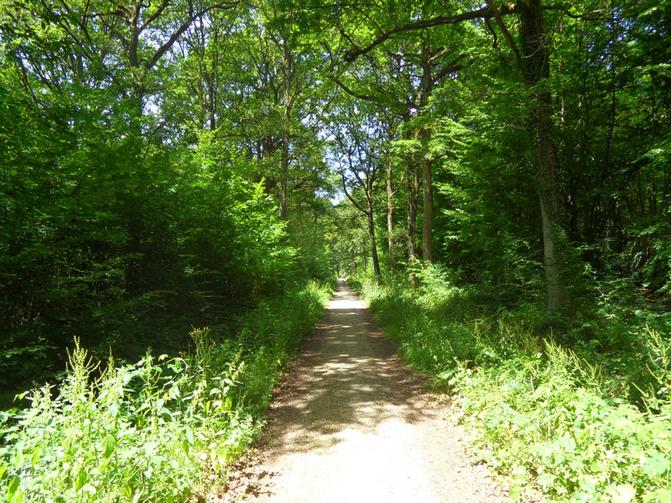 Balade p destre autour des etangs de hollande yvelines for Visite gratuite dans les yvelines