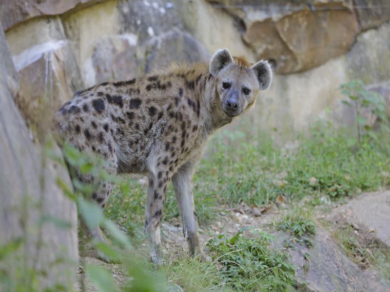 Hy nes nouveaute promotion 2016 au zoo de thoiry for Zoo yvelines 78