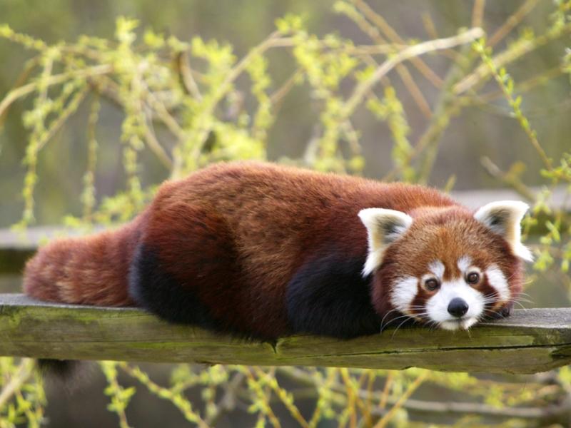 Parcs th me et visite en famille yvelines tourisme for Parc animaux yvelines