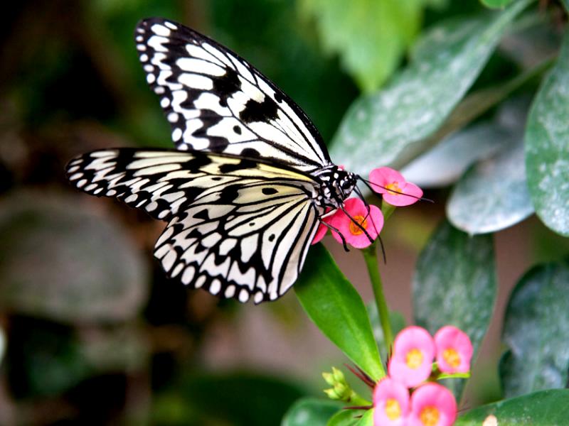 En famille yvelines tourisme - Images de papillon ...